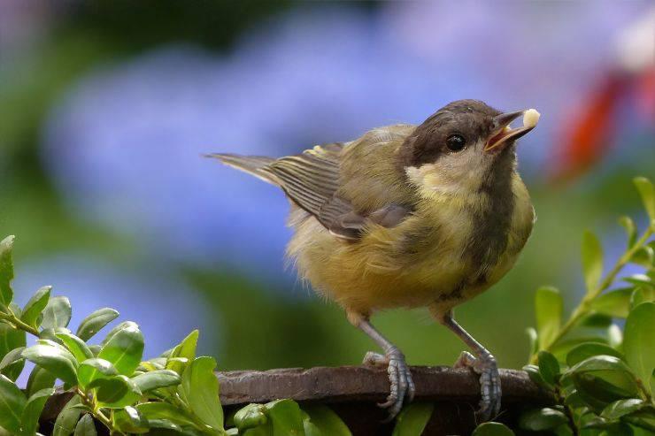 Le vitamine nella dieta degli uccelli