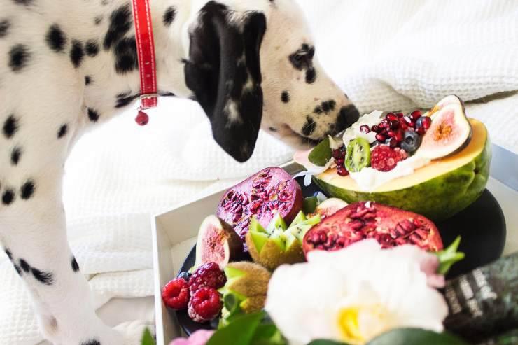 Il cane inattivo e gli alimenti giusti