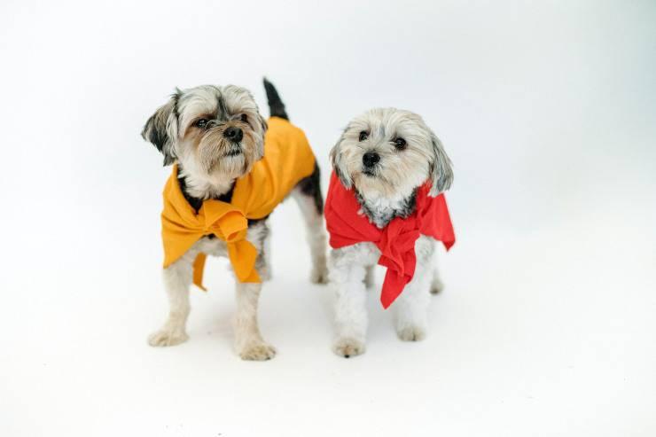 Razze di cani mini toy