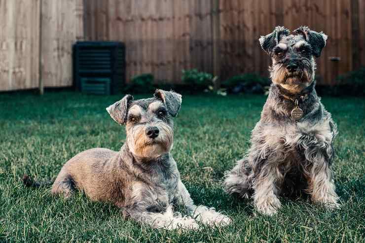 Razze di cani che scavano in giardino