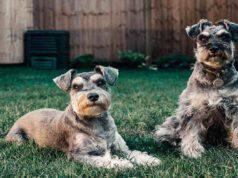 Cani che scavano di più in giardino