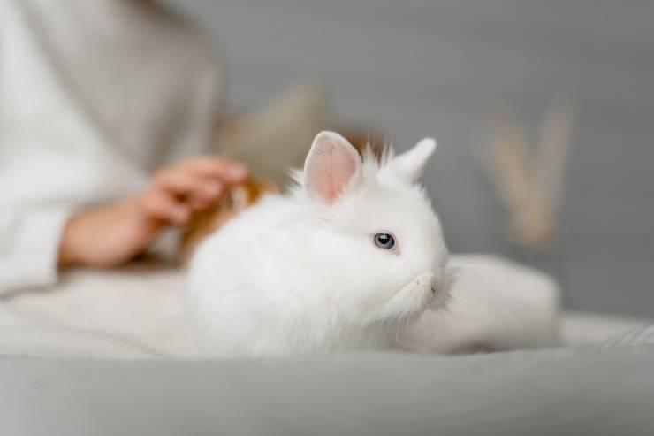 Il disturbo nel coniglio