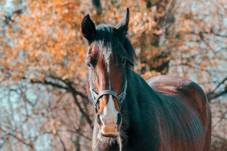 Patologia nel cavallo