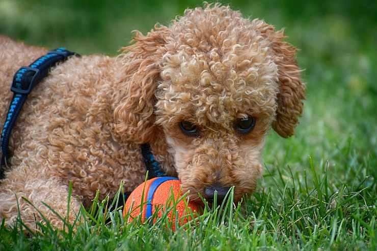 Pelosetto gioca con palla