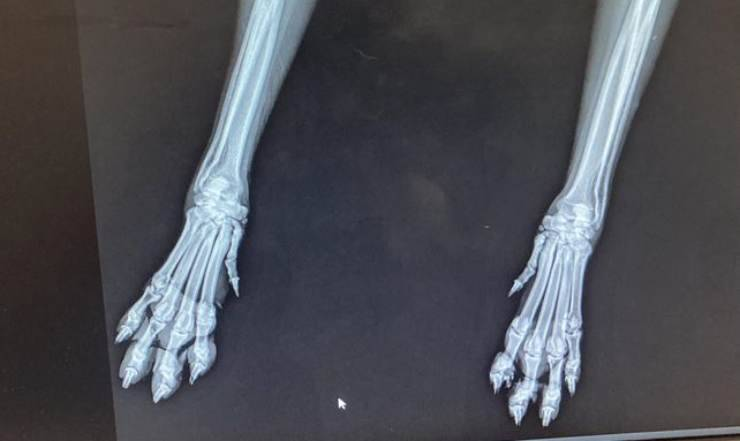 radiografia cane (Foto Twitter)