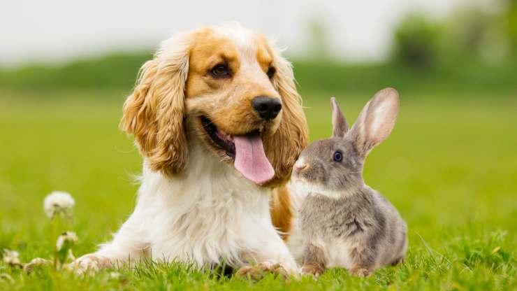 razze cani che possono convivere conigli