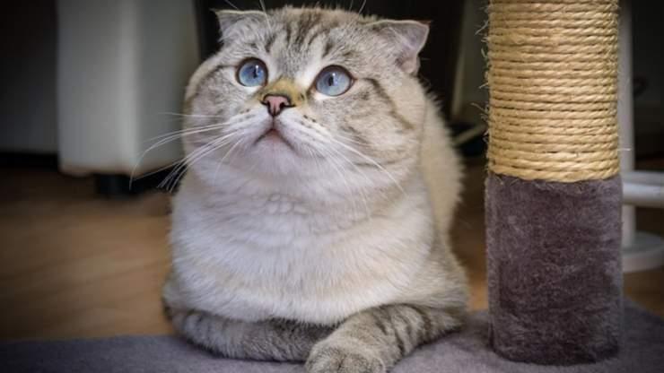 razze di gatti indipendenti
