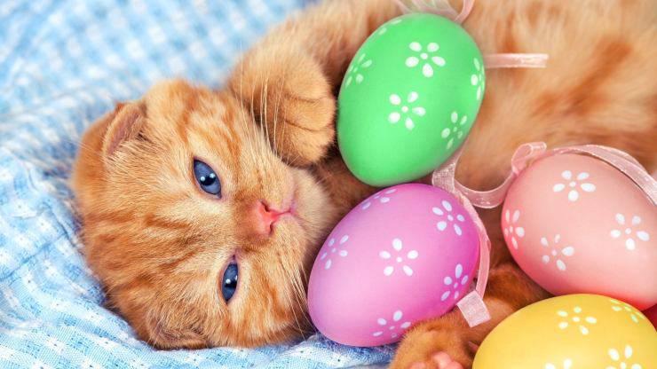 ricette per Pasqua al gatto