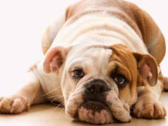 rotavirus nel cane