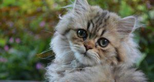 rotavirus nel gatto