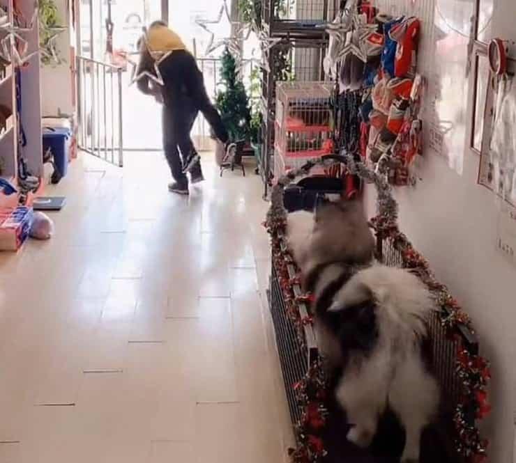 Il salvataggio della donna grazie ad Alaska l'Husky (Screen Video)