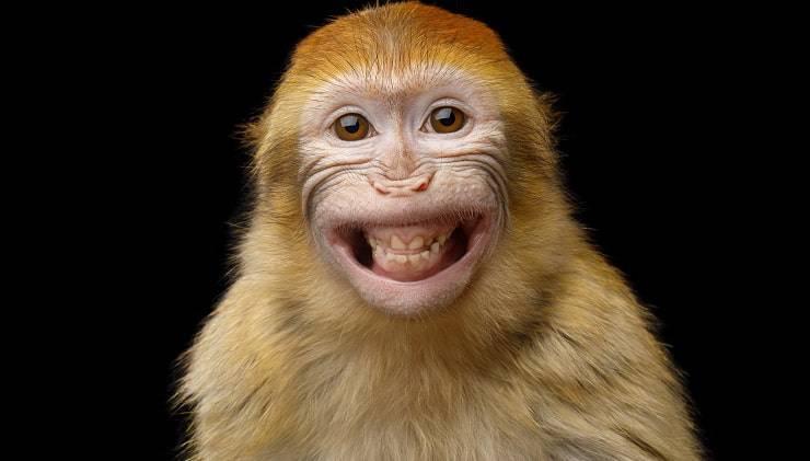 animali e risata