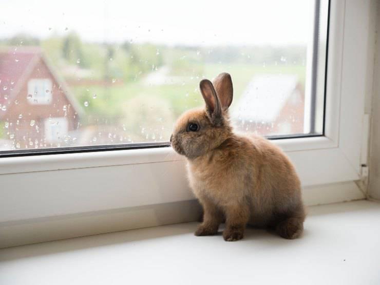 L'alopecia del coniglio