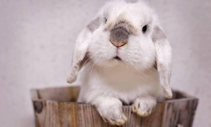 simpatico coniglio