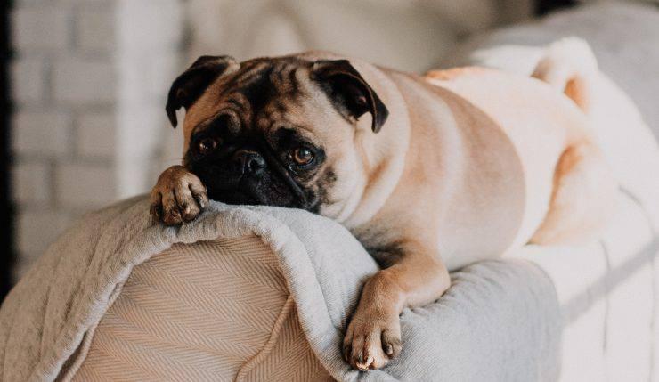 sintomi rotavirus nel cane