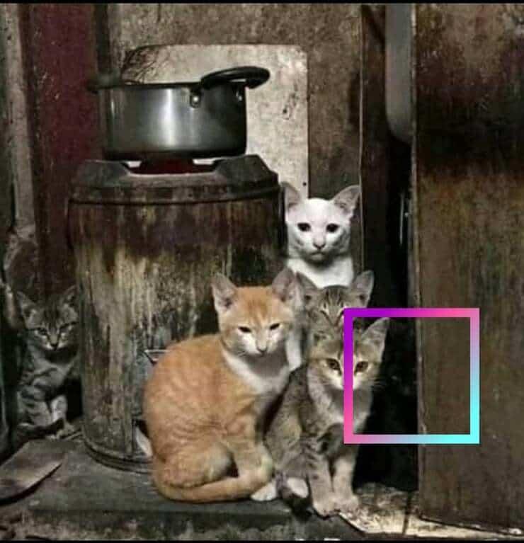 Soluzione del test visivo dei 6 gatti