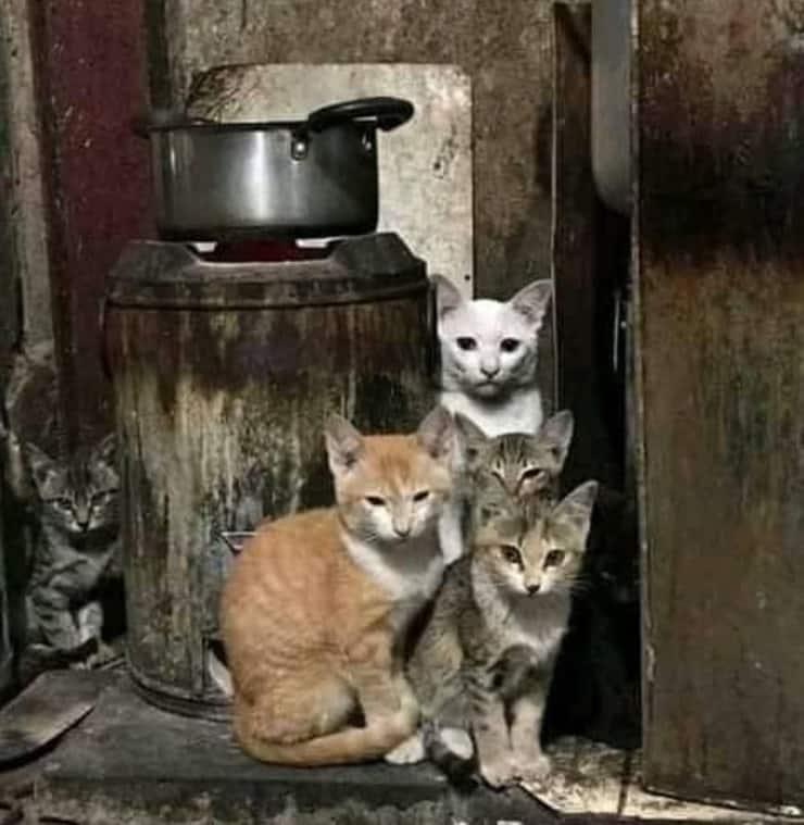 Il test visivo dei 6 gatti (Foto facebook)