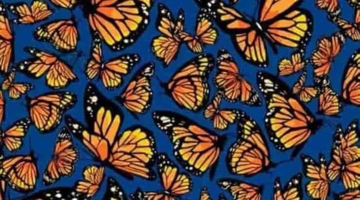 Il test visivo delle farfalle riesci a trovare tutte le libellule nascoste nell'immagine?