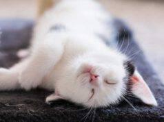 troppe coccole stressano il gatto