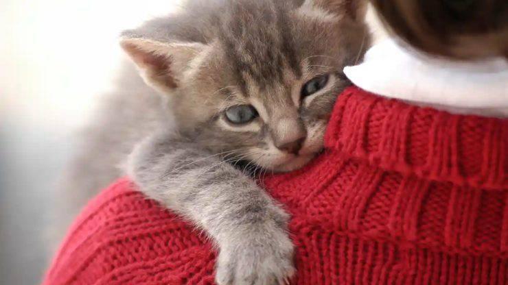 ulcera dei roditori nel gatto