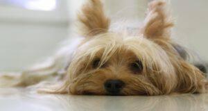 Il cane e la coccidiosi