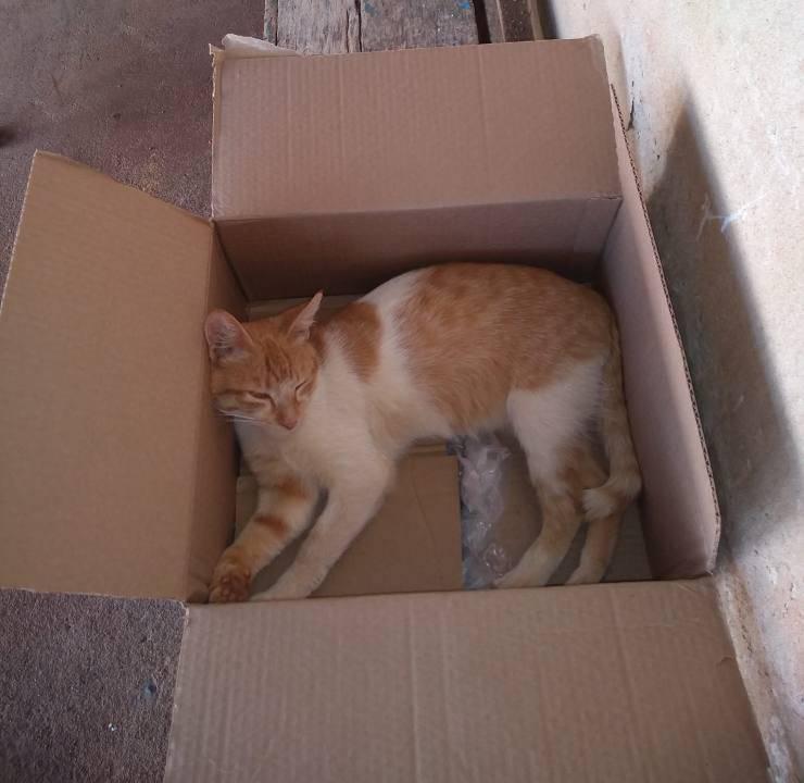 gatto torna casa micio