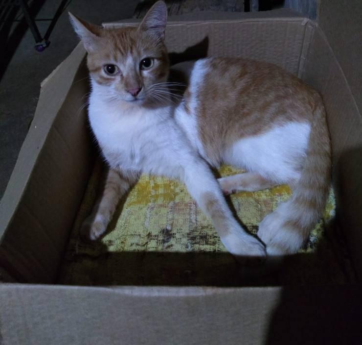 gatto torna casa gattino