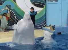 Il beluga nel parco acquatico (Foto Facebook)