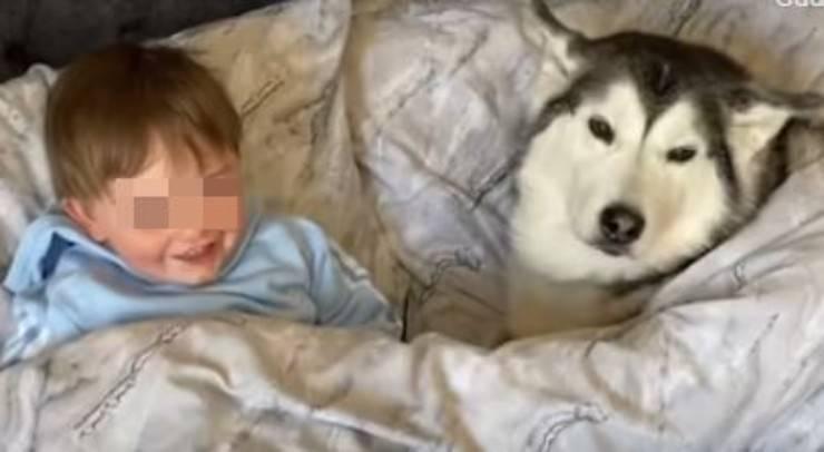 Il cane e il bimbo insieme (Foto video)