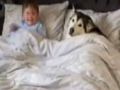 L'husky e il bimbo (Foto video)