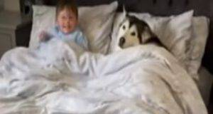 L'husky e il bimbo (Foto video)