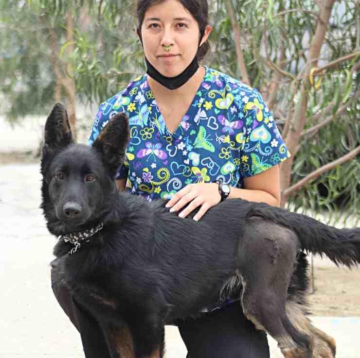 proprietari chiedono eutanasia cane