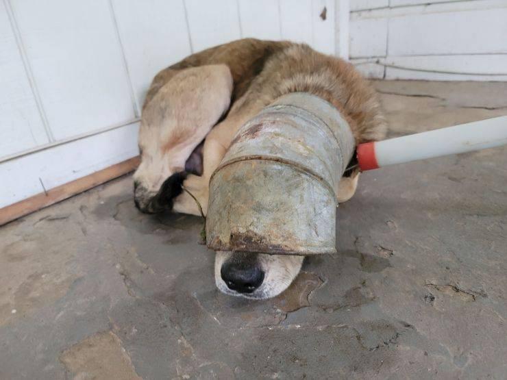 cane testa tubo metallo