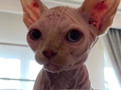 Gatto di Ilary (Foto Instagram)