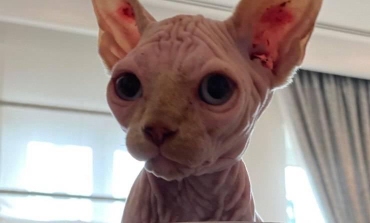 Il gatto Alfio (Foto Instagram)