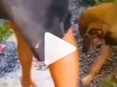 mamma cane salva cuccioli tana