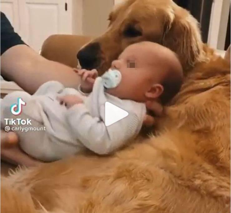 allontanano bambino cane video