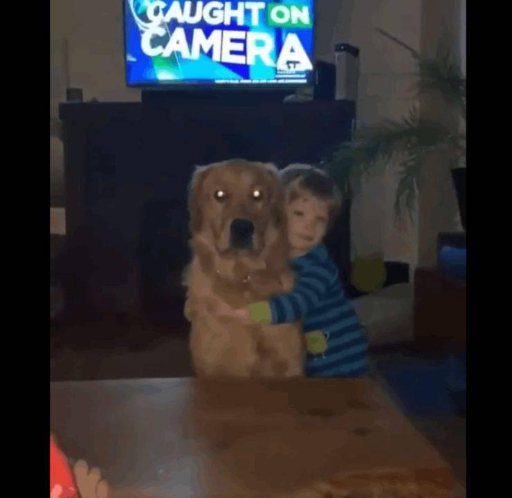 cane ricambia abbraccio bambino