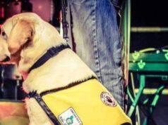 Uno dei labrador addestrati (Foto Facebook)