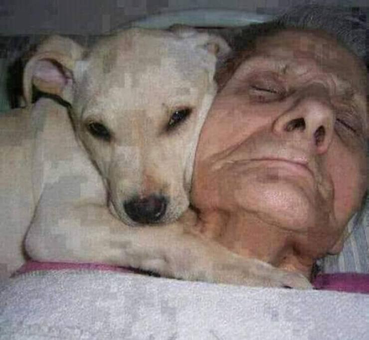 cane proprietaria coma