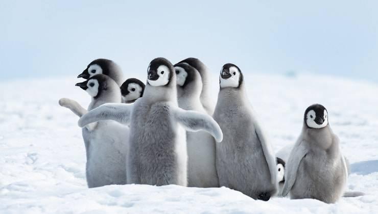 famiglia di animali
