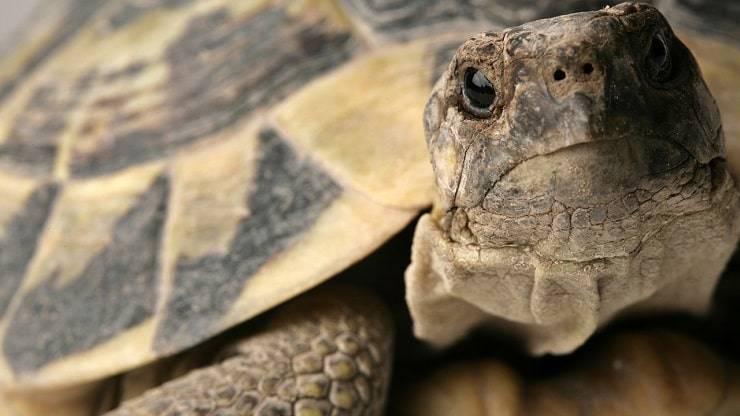 Giornata delle tartarughe