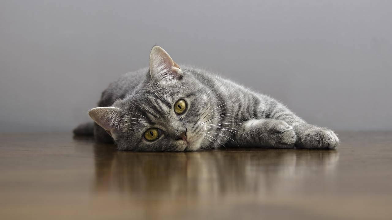 È obbligatorio il microchip per il gatto in Umbria?