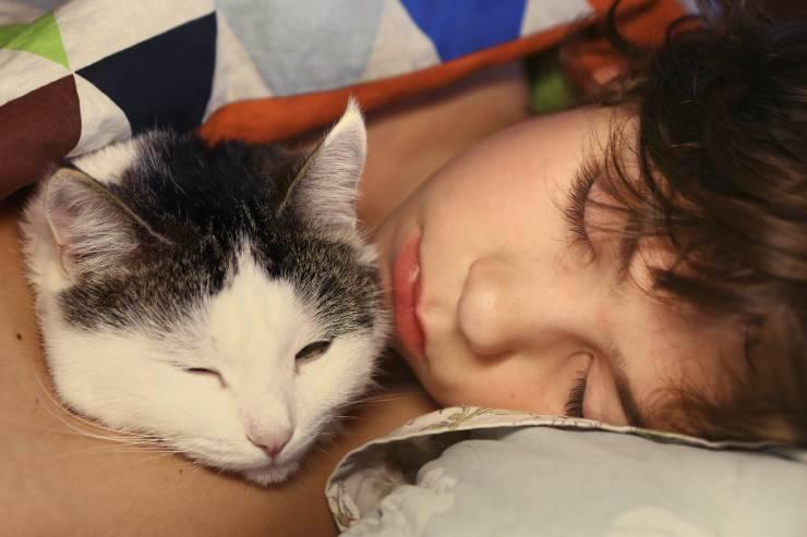 Micosi da gatto nei bambini