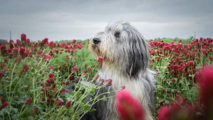 carattere cane fasi vita