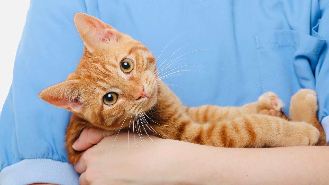 Microchip obbligatorio per i gatti in Puglia