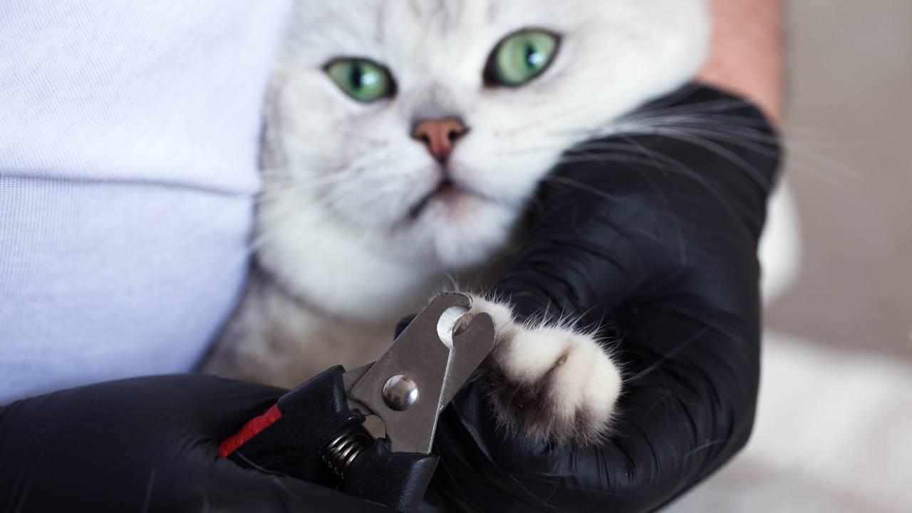 Come scegliere il tagliaunghie per il gatto