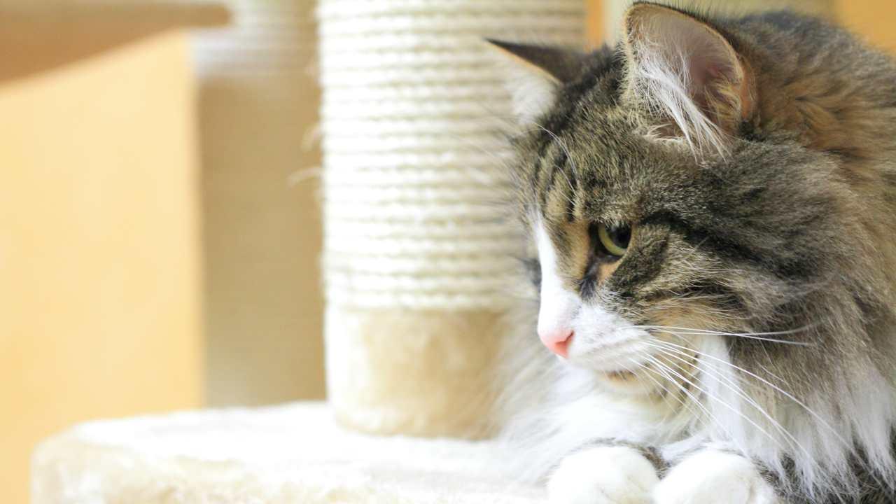 Come scegliere il tiragraffi per il gatto