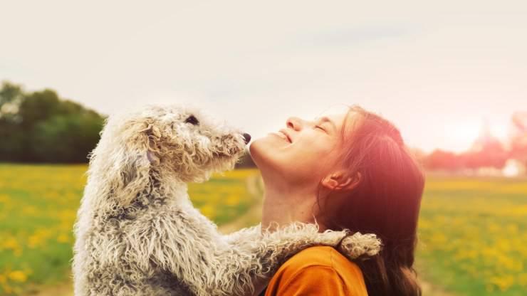 Adottare un Bedlington Terrier