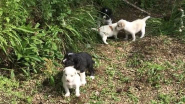 Sette Cuccioli Cane Abbandonati Bosco